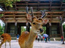 神道と動物の関係について